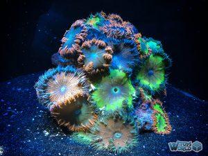londonzoo-auquarium-coral