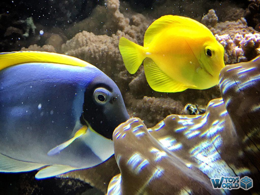 londonzoo-auquarium-fish