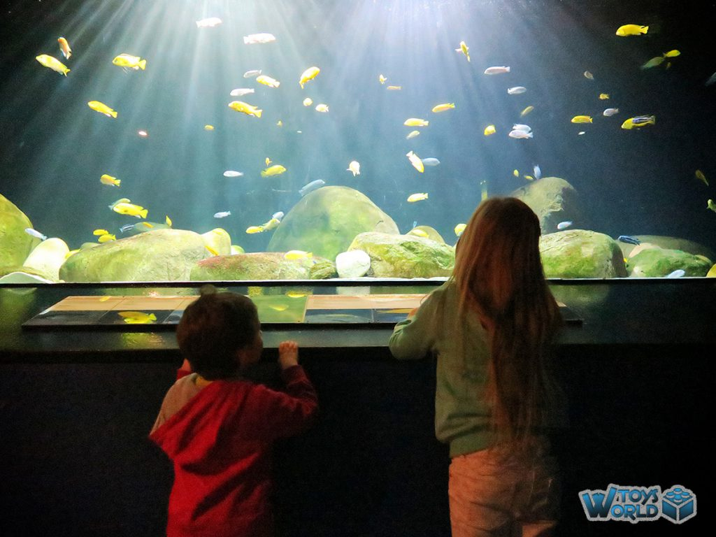 londonzoo-auquarium-fish2