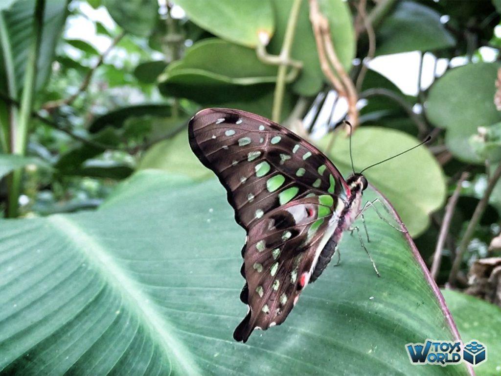 londonzoo-butterfly-2