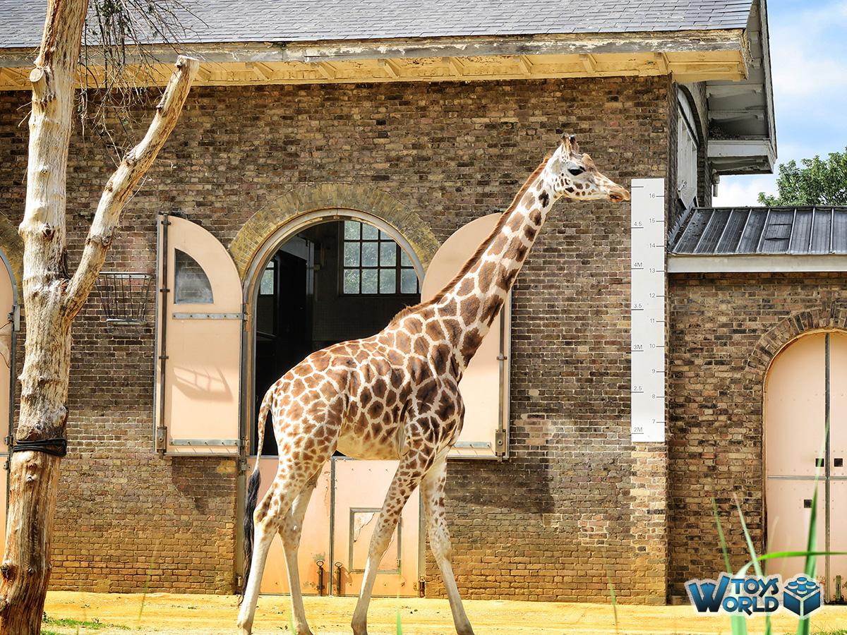 Days out london zoo regents park london uk toysworld for Garden room london zoo