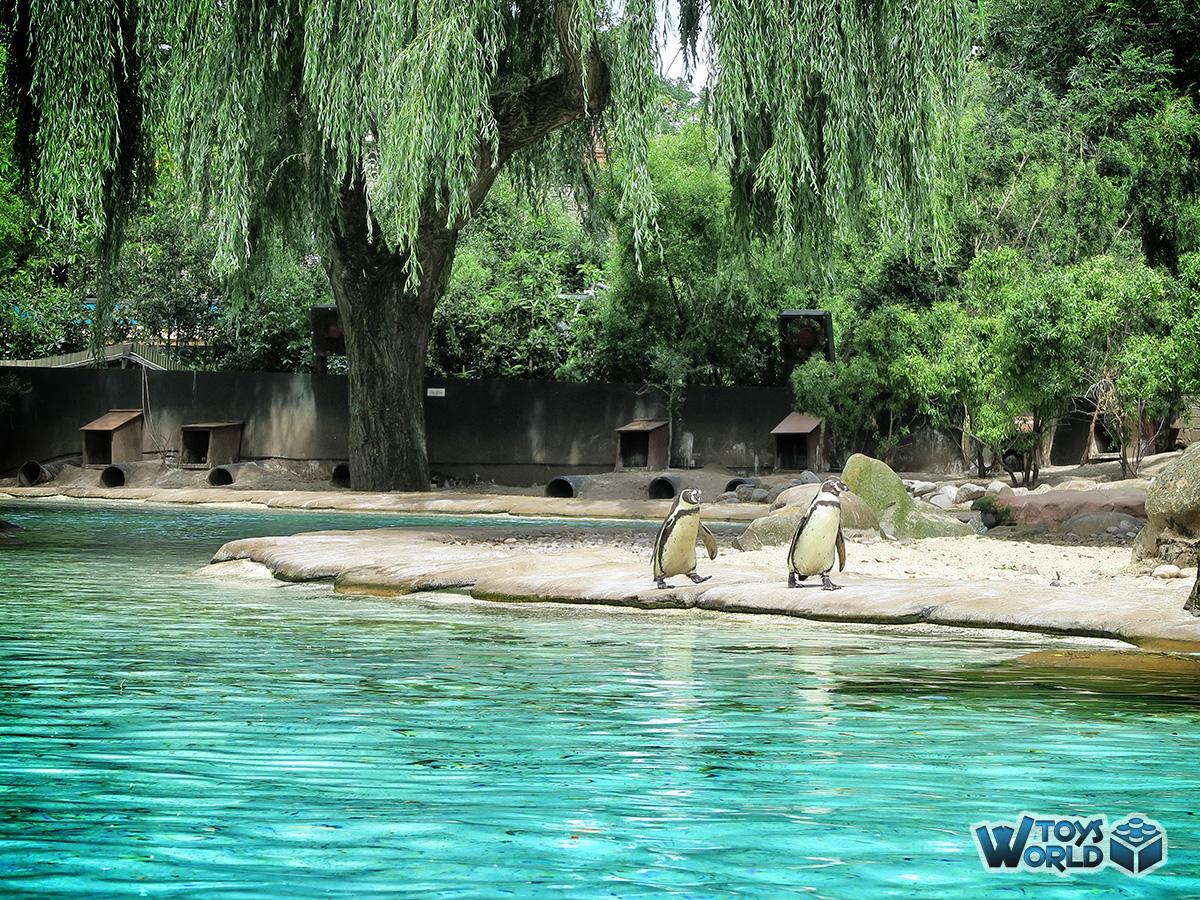 Days Out London Zoo Regents Park London Uk Toysworld